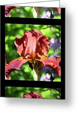 Copper Iris Triptych Squared Greeting Card