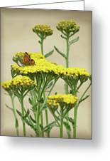 Copper On Yellow - Butterfly - Vignette 2 Greeting Card