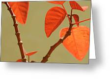Copper Plant Greeting Card