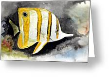 Copperband Butterflyfish  Greeting Card