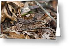 Copperhead 4 Greeting Card