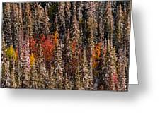 Copse Of Color  Greeting Card