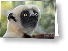 Coquerel's Sifaka Lemur Greeting Card