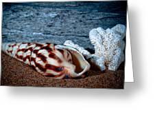 Coquina Shell Greeting Card