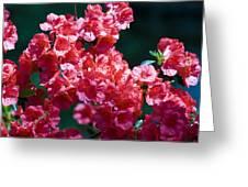 Coral Azaleas Greeting Card