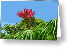 Coral Bush Jatropha Multifida With Flower And Fruit Greeting Card