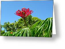 Coral Bush With Flower And Fruit Greeting Card
