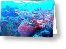 Coral Candy Greeting Card