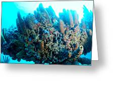 Coral Crossbeam Greeting Card