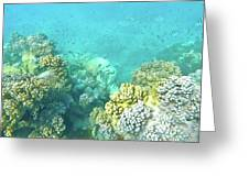 Coral Greeting Card by Debbie Cundy