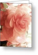 Peach Petals Glow Greeting Card