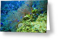 Coral In Truk Greeting Card