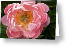 Coral 'n' Gold Greeting Card