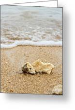Coral On The Beach Greeting Card