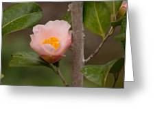 Coral Camellia 1 Greeting Card