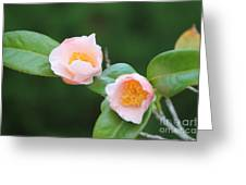 Coral Camellia 2 Greeting Card