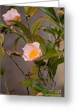 Coral Camellia Greeting Card