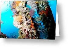 Coral Pillars Greeting Card