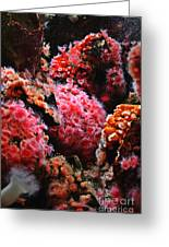 Coral Polyps Greeting Card