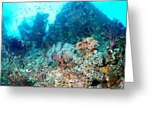 Coral Pyramid Greeting Card