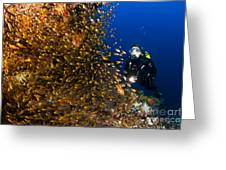 Coral Reef And Diver  Greeting Card