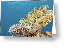 Coral Reef Eco System Greeting Card