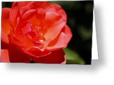 Coral Rose Focus Left Greeting Card