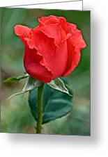 Coral Rosebud At Pilgrim Place In Claremont-california   Greeting Card