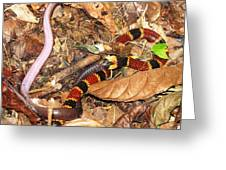 Coral Snake Snack Greeting Card
