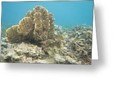 Coral Tree Greeting Card