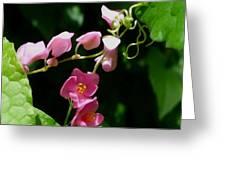 Coral Vine Flower Greeting Card