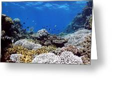 Corals Garden Greeting Card