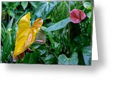 Corazon Chino 1 Greeting Card
