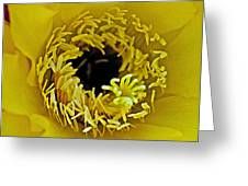 Core Of A Yellow Cactus Flower At Pilgrim Place In Claremont-california Greeting Card
