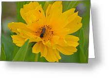 Coreopis Honey Bee Greeting Card