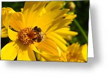 Coreopsis Beauty And The  Bee. Greeting Card