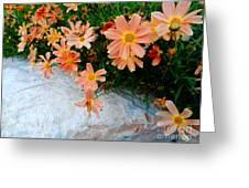 Coreopsis Sienna Sunset Greeting Card