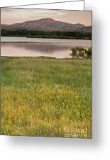 Corepsis Blooming At The Quanah Parker Lake Greeting Card