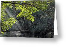 Corkscrew Swamp - In The Autumn Greeting Card