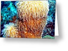 Corky Sea Finger Coral - The Muppet Of The Deep Greeting Card
