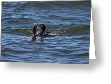 Cormorant Catching A Porgy Greeting Card