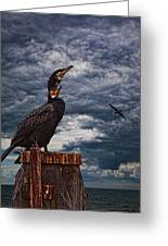 Cormorant Couple Greeting Card