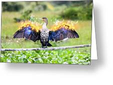Cormorant Dries Its Wings Greeting Card