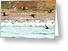 Cormorant Flight In Frenzy Greeting Card