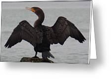 Cormorant In Bellingham Greeting Card