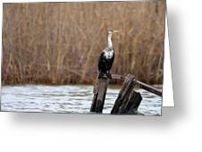 Cormorant On Post Greeting Card