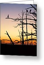 Cormorant Sunset Greeting Card