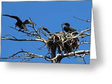 Cormorant Teenager In Nest Begging For Food Greeting Card