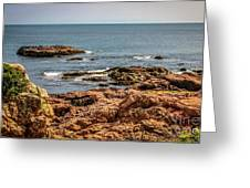 Cormorants And Seagulls Resting Greeting Card