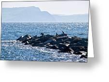 Cormorants At The Cobb - Lyme Regis Greeting Card